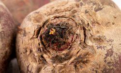 Beet closeup