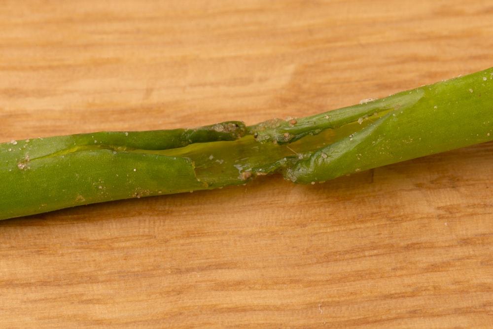 Chives damaged stalk