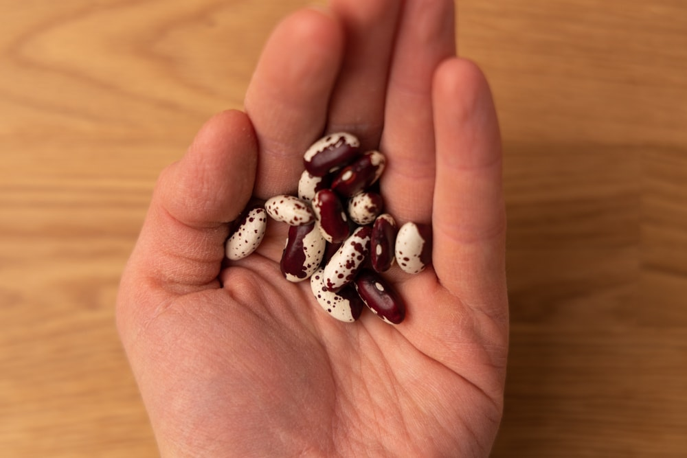 Dried beans in hand