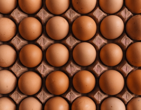 Egg lot in a carton packaging
