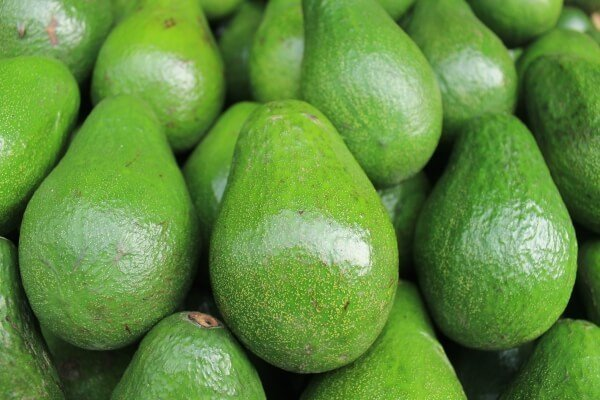 Green avocados