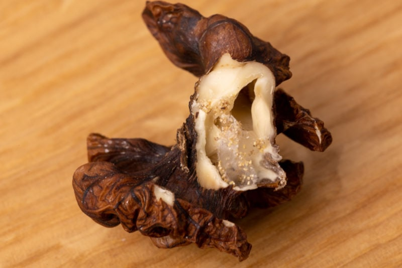 Old hollow walnut