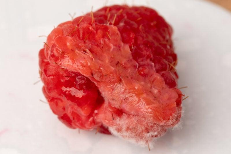 Moldy and mushy raspberry