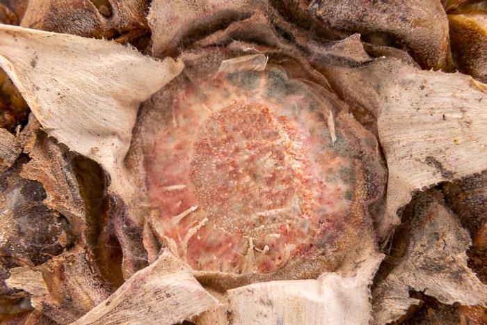 Moldy bottom of a pineapple