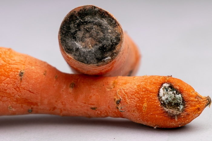 Some moldy carrots