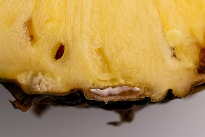Moldy pineapple beneath skin