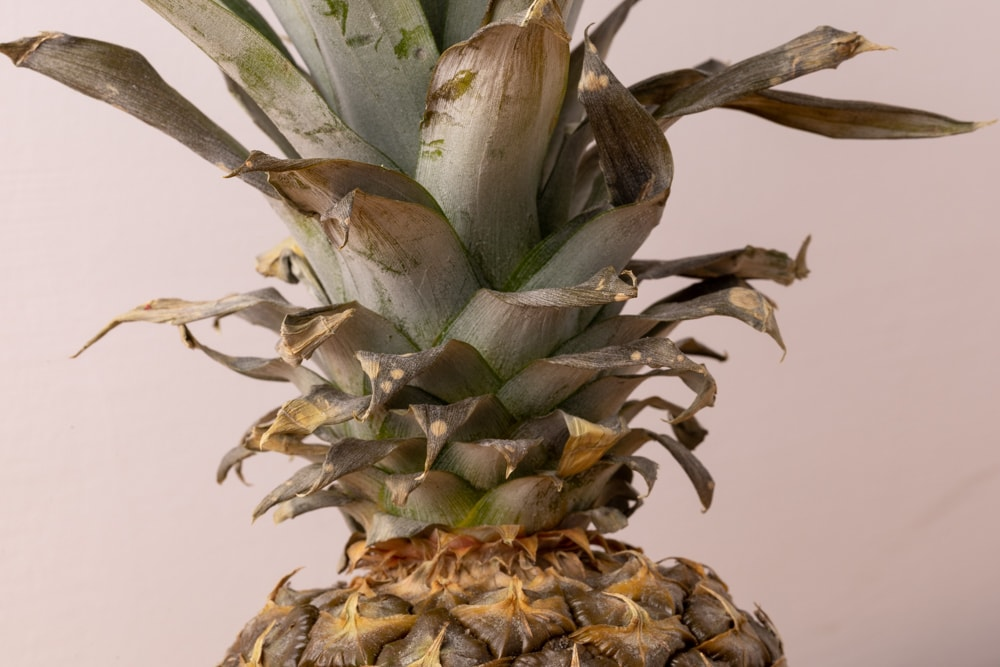Pineapple: old leaves